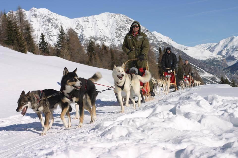 husky-village-sleddog-4