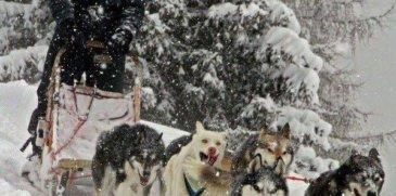 Dall'Alaska alla Valdidentro: lo sleddog dell'Husky Village