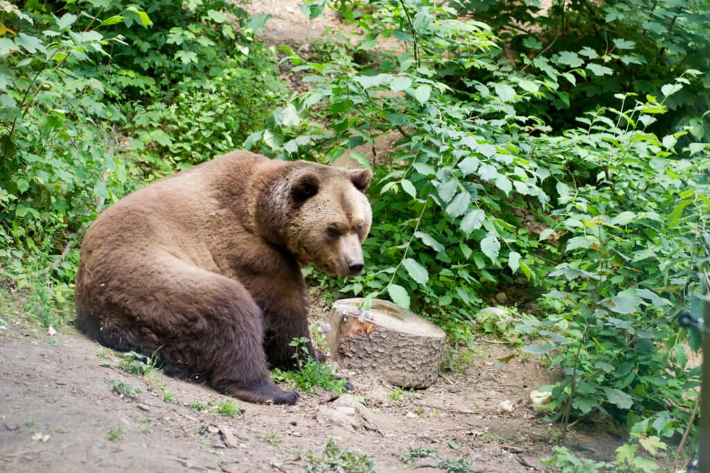 Arosa Bearland 2