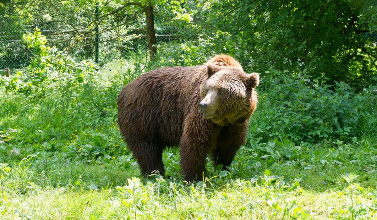 Arosa – La Terra degli Orsi