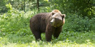 Arosa - La Terra degli Orsi
