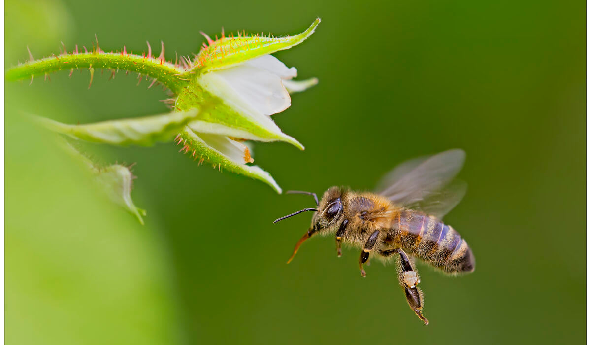 World Bee Day – La Slovenia e Bled culla delle api