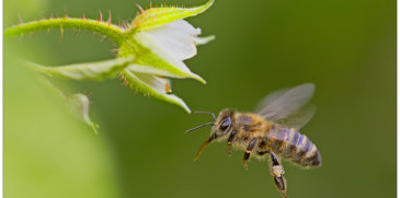 World Bee Day - La Slovenia e Bled culla delle api