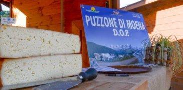 Formaggio Puzzone: la tradizione di Moena passa dal palato