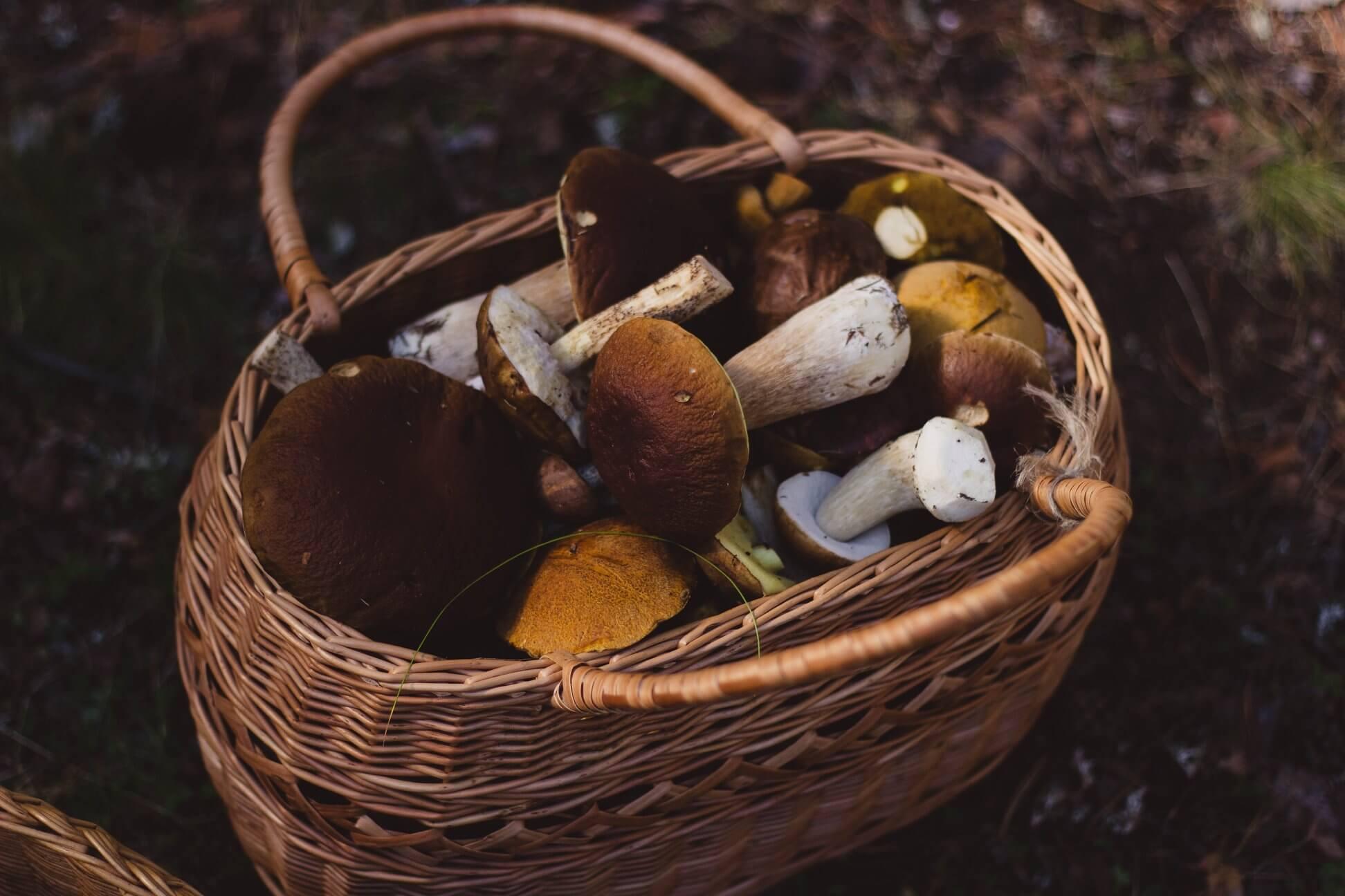 Cestino con porcini - Festa dei funghi