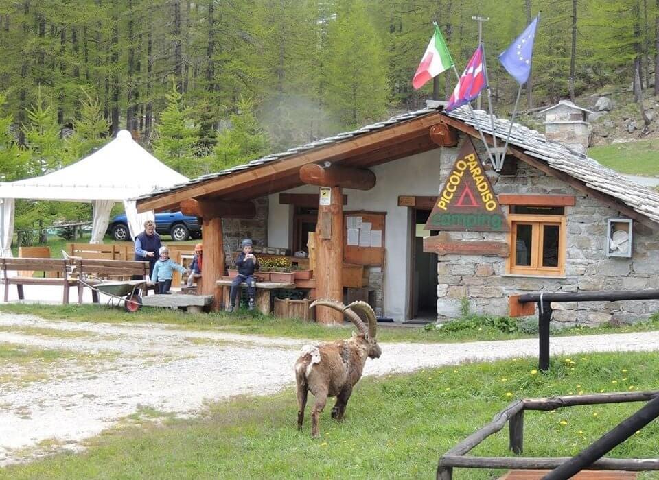 """Un """"Piccolo Paradiso"""" a Ceresole Reale, Alessandra Oberto ci racconta del suo campeggio"""