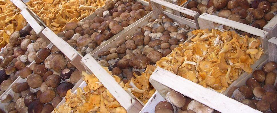 Festa dei funghi a Forni di Sopra 01