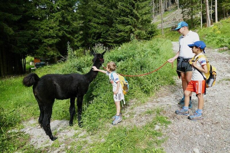 Trekking con i lama a Mallnitz
